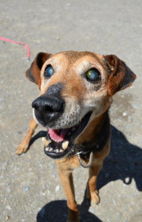 Slepý psíček znovu hľadá nový domov.  735778710d7