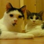 Ewanko a Merlin v domove